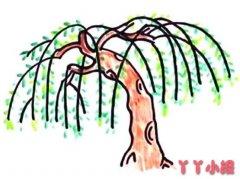 怎么画柳树简笔画教程简单又漂亮涂色