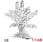 怎么画芭蕉树素描简笔画教程手绘简单又漂亮