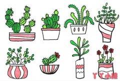 盆栽绿植怎么画 植物简笔画图片