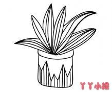 绿植盆栽的画法步骤教程简单又漂亮