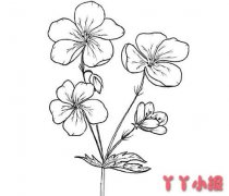 手绘鲜花怎么画 鲜花简笔画图片