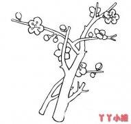 怎么画漂亮的梅花简笔画教程简单好看