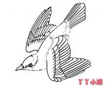 怎么画飞翔的黄鹂鸟简笔画教程简单好看