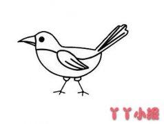 喜鹊的画法步骤教程简单又漂亮