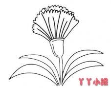 母亲节康乃馨怎么画简单又漂亮图解