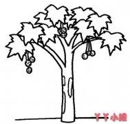 枫树怎么画简单又漂亮 枫树简笔画图片