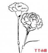 康乃馨的画法简单又漂亮 康乃馨简笔画图片