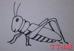 蝗虫蚂蚱怎么画带步骤图 蝗虫简笔画图片