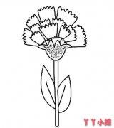 康乃馨的画法简单 母亲节康乃馨简笔画