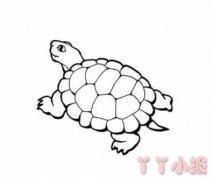 简单乌龟的画法教程 小乌龟简笔画图片
