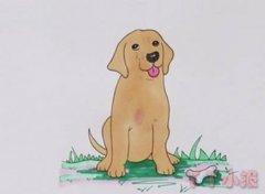 拉布拉多犬的画法步骤涂色简单又好看
