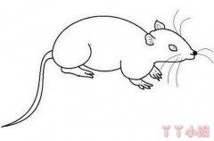 小老鼠的画法步骤图简单又好看