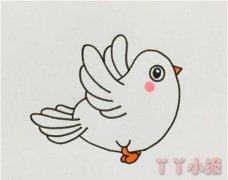 小白鸽的画法步骤涂色 鸽子简笔画图片