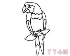 鹦鹉怎么画简单好看 鹦鹉简笔画图片