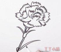 康乃馨的画法简单又漂亮 康乃馨怎么画