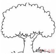 大树怎么画简单漂亮 大树简笔画图片