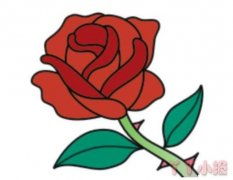 玫瑰花怎么画填色 玫瑰花简笔画图片