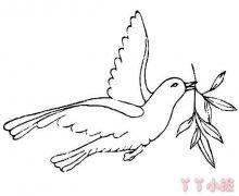 和平鸽怎么画好看 和平鸽简笔画图片