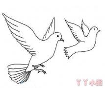 和平鸽图片 和平鸽简笔画教程 简单和平鸽的方法