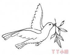 和平鸽橄榄枝简笔画 和平鸽橄榄枝画法教程