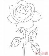 玫瑰花的画法简单又漂亮 玫瑰花简笔画