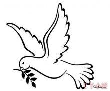 和平鸽怎么画简单又漂亮 和平鸽简笔画图片