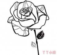 玫瑰花怎么画简单又漂亮 玫瑰花简笔画