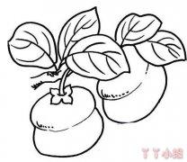 柿子简笔画图片怎么画 柿子的画法教程