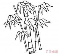 怎么画竹子简笔画教程简单又好看