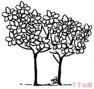 桂花树简笔画怎么画简单又好看