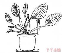 滴水观音盆栽简笔画怎么画简单漂亮