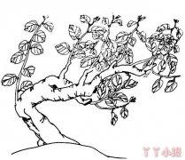 桂花树的画法简笔画图片简单又漂亮手绘