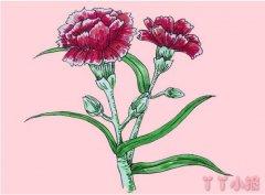 母亲节康乃馨怎么画简笔画步骤简单漂亮涂色
