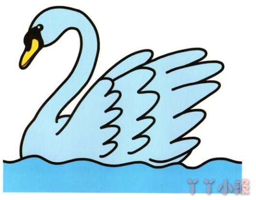 涂色天鹅怎么画简单漂亮 天鹅简笔画图片