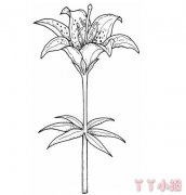 怎么绘画百合花简笔画 百合花的画法简单又漂亮