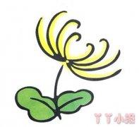 怎么画彩色菊花简笔画教程简单又漂亮
