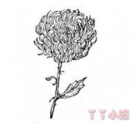 儿童简笔画手绘菊花的画法教程简单漂亮
