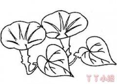 牵牛花怎么画简单又漂亮 牵牛花的画法步骤教程