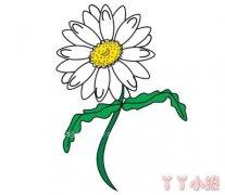 怎么画彩色雏菊简笔画 雏菊花的画法简笔画教程