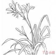手绘兰花怎么画简单漂亮兰花简笔画图片