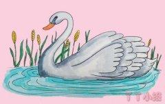 白天鹅手绘怎么画涂颜色简单漂亮步骤图