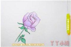 教你一步一步画蓝玫瑰简笔画教程简单漂亮