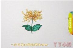 教你怎么画菊花简笔画步骤教程涂色简单