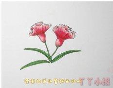 怎么画康乃馨简笔画步骤教程涂简单漂亮
