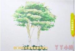 教你怎么画大树简笔画步骤教程涂颜色手绘