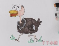 教你怎么画鸵鸟简笔画步骤教程涂颜色