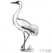 怎么素描仙鹤的画法简笔画图片简单好看