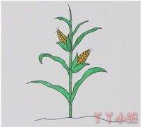 手绘一棵玉米简笔画怎么画涂色简单好看