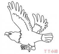 怎么画飞翔的老鹰简笔画教程简单好看