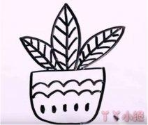 万年青盆栽怎么画简笔画教程简单漂亮